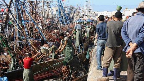Morocco fish fight