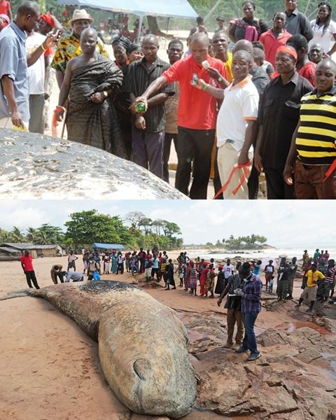 ghana dead whale funeral