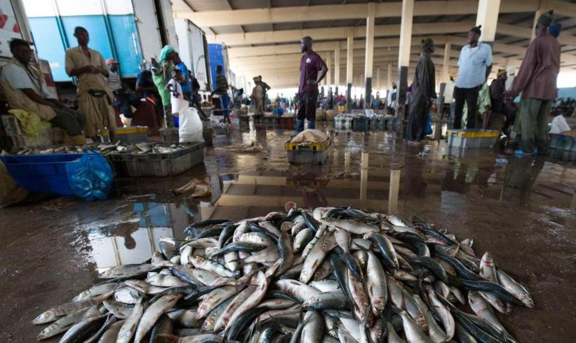Fish landings are seen on the floor of Joal market Jim Wickens