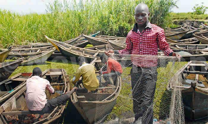 Fishing boats in breeding areas in Wanseko on Lake Albert