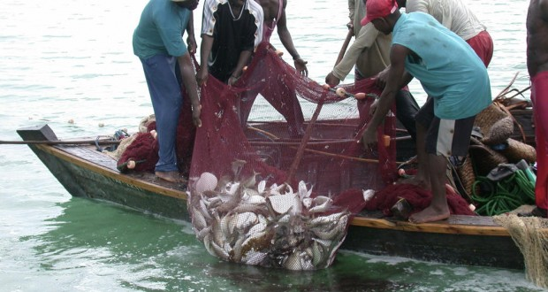 'Fish shortage to hit Ghana if Chinese fishermen are banned'