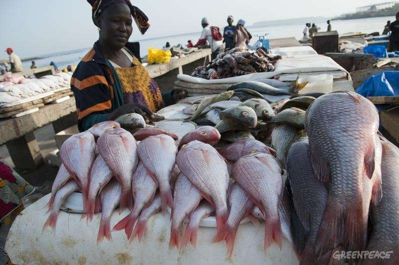 Africa - illegal foreign fishing killing local trade