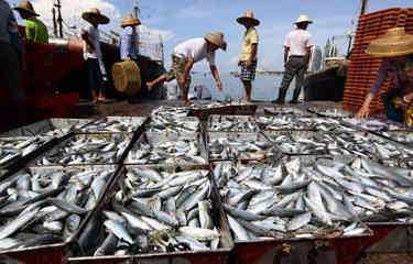 Unloading African catch, Chinese fisheries leader boasts of support from subsidies