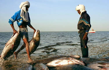 Chinese fishing firm courts Mauritania with skills-for-access deals