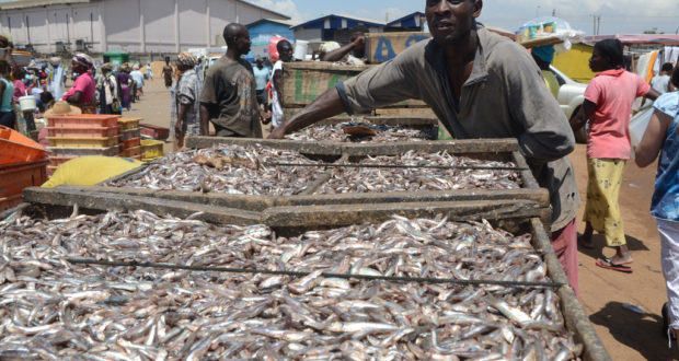 ghana fishing in the market place