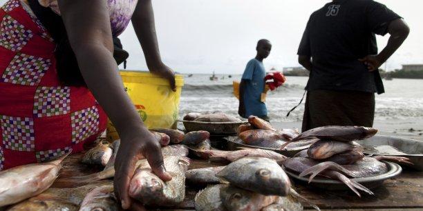 Au Sénégal, le volume des produits halieutiques débarqués sont estimés à 450 000 tonnes en moyenne annuelle. (Crédits : Reuters)