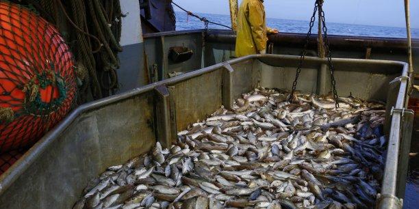 En Tunisie, le volume de captures de poissons et de produits de l'aquaculture a atteint cette année quelque 118 000 tonnes. (Crédits : Reuters)