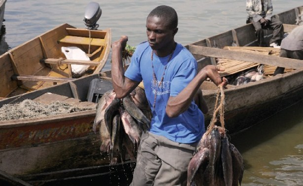 A fisherman at the Ggaba landing site recently - Photo: Jimmy Siya/The Independent