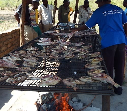 Members of a co-operative process tilapia © Aquaculture Zimbabwe