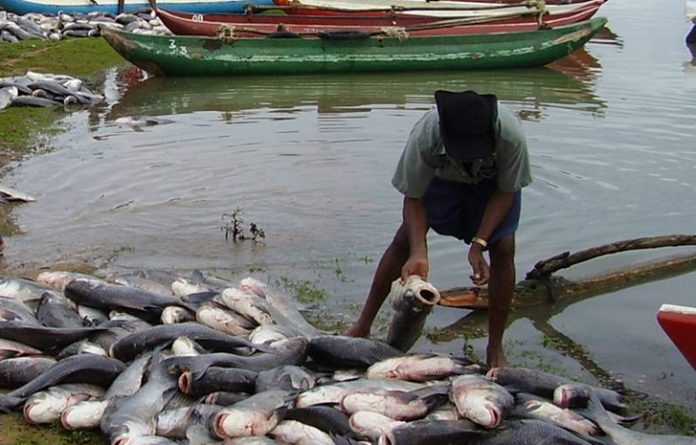 Nigeria fishing scene