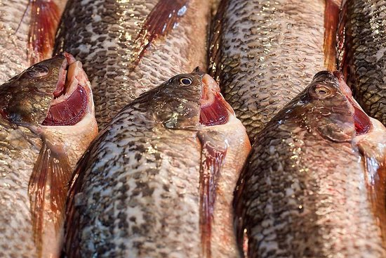 tilapia imports banned