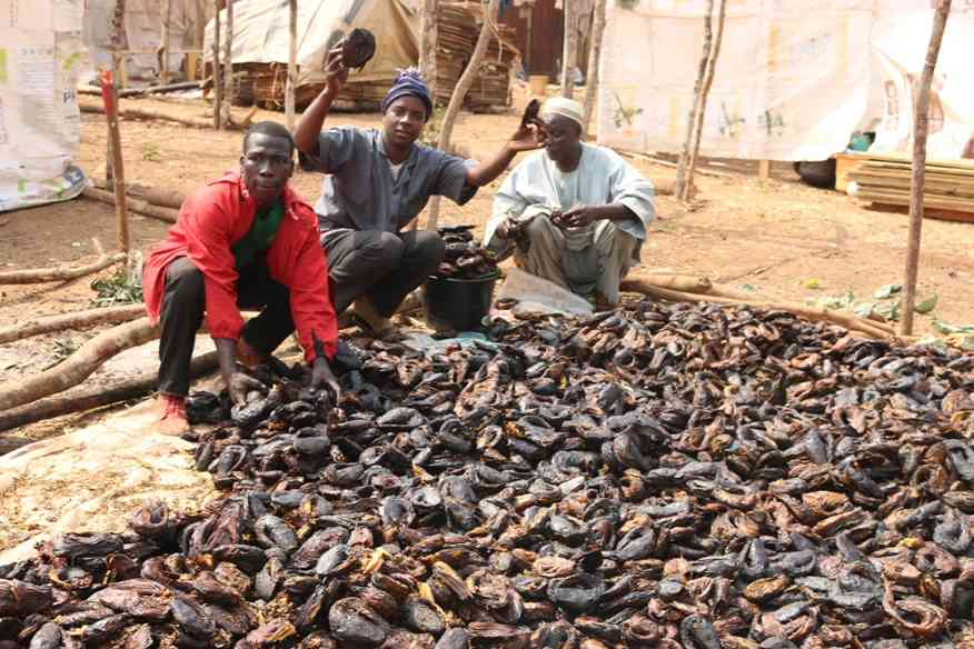 Cameroun sechage du poisson a Lom Pangar