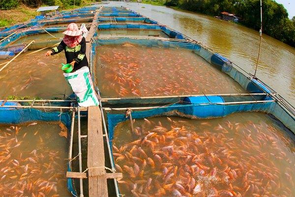 Nigeria - fishery
