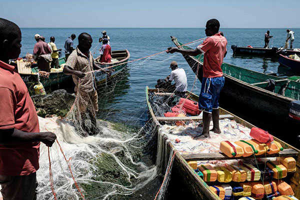 Fishermen preparing their nets on Migingo island which is densely populated by residents fishing mainly for Nile perch in Lake Victoria on the border of Uganda and Kenya. PHOTO | YASUYOSHI CHIBA | AFP