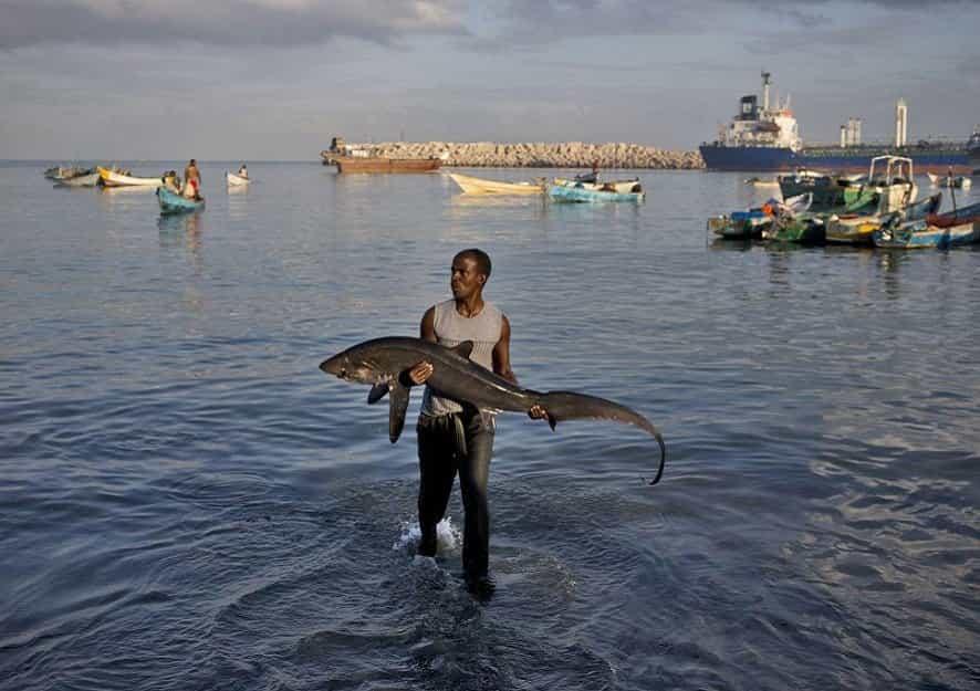 Somalia gives up its fishing rights to China