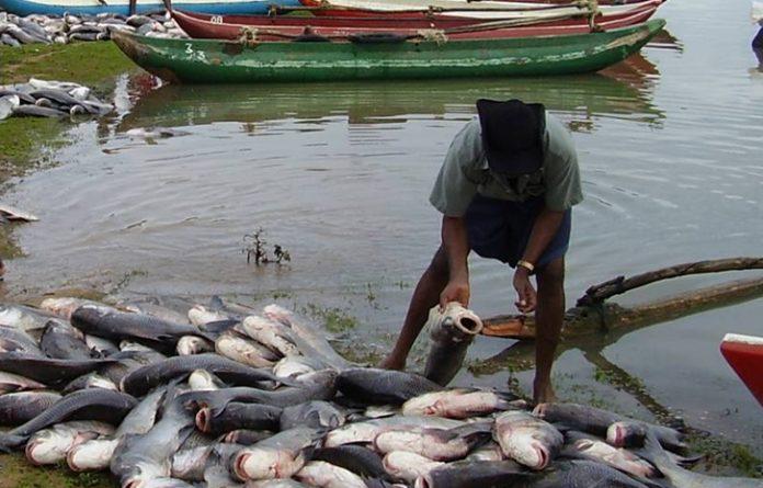 nigeria Fishing aquaculture drops 2017