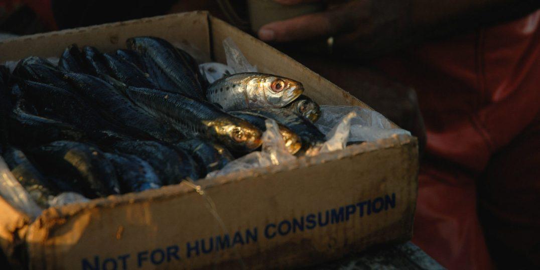 kenya chinese fish