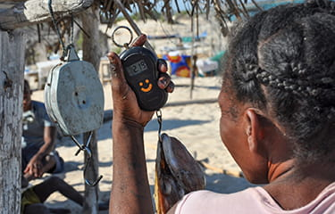Madagascar launches its first octopus fishery improvement project