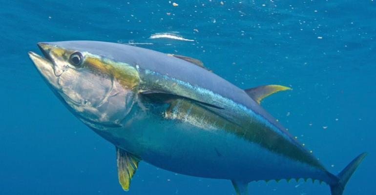 Ghana tuna