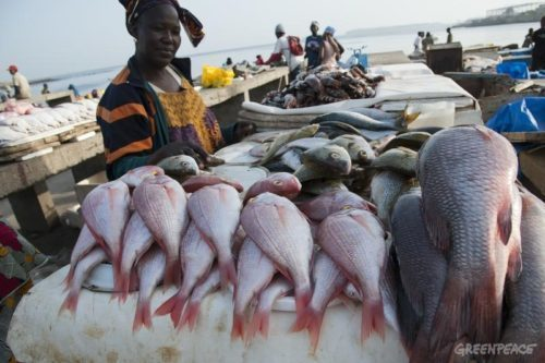 Government blamed for shortage and soaring prices of fish in Sierra Leone
