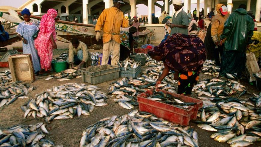 Marché au poissons en Mauritanie. Getty Images/Jean-Bernard Carillet