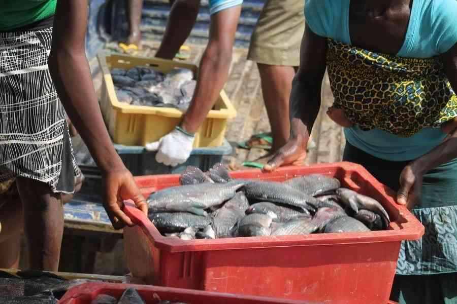Nigeria fish business