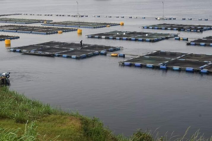 Ghana cage farm - A tilapia farm on Lake Volta