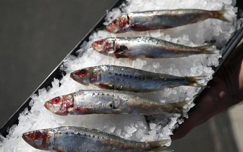 Illustration : Togo - poissons sur glace