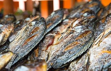 Uganda fish