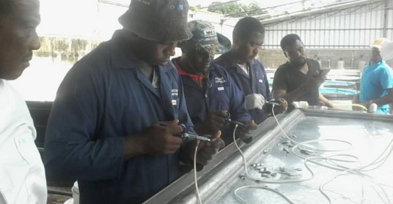 Ghana-fish_immunisation1
