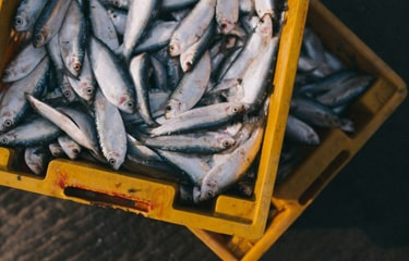 Seafood - Chinese overfishing threatens development of West African fishing sector