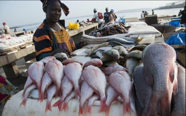 togo-woman-fishmonger-standing