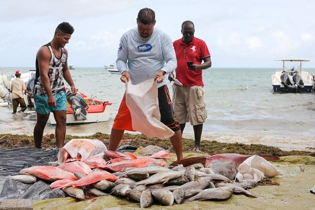 Michaud said fisheries are for all Seychellois and it is important to be accountable and have a system where you get more participation of all the different groups. (File photo: Romano Laurence) Photo license