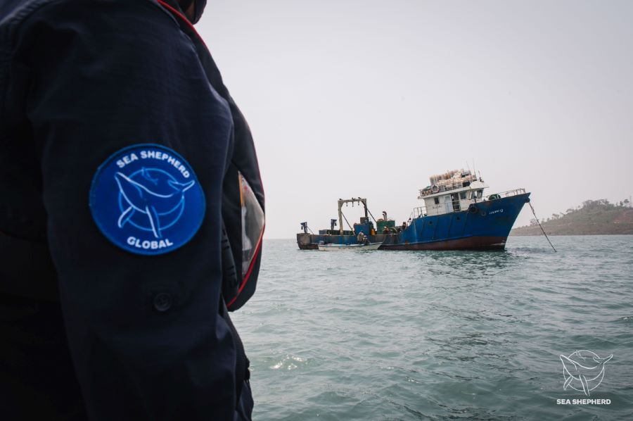 Sea Shepherd assists Sierra Leone Navy in arrest of five illegal fishing vessels.