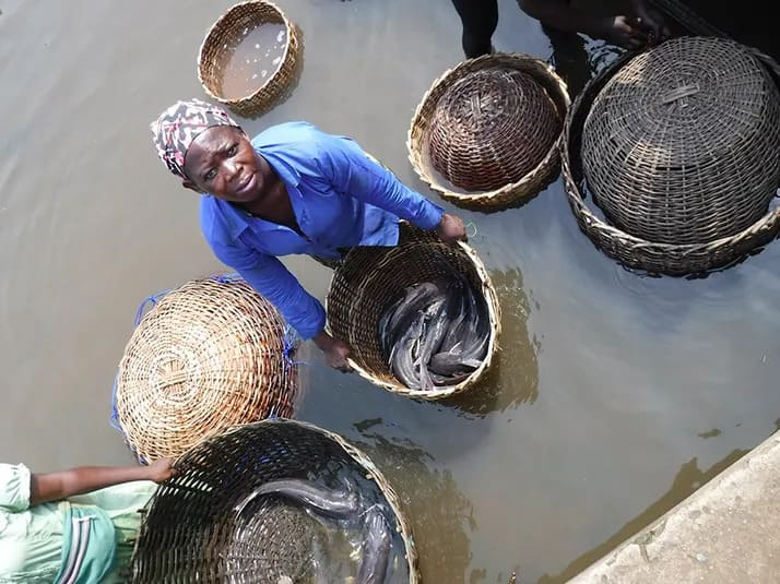 Nigeria_Woman-with-wild-and-aquacultured-catfish-Nigeria-credit-Joe-Steensma-min