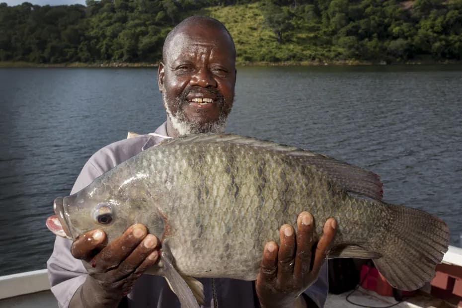 chicoa-tilapia-farm-mozambique-2-credit-chicoa-min